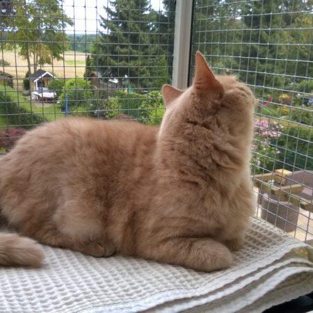 Katze und Katzenbalkon