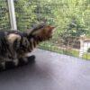 Katze auf Katzenbalkon